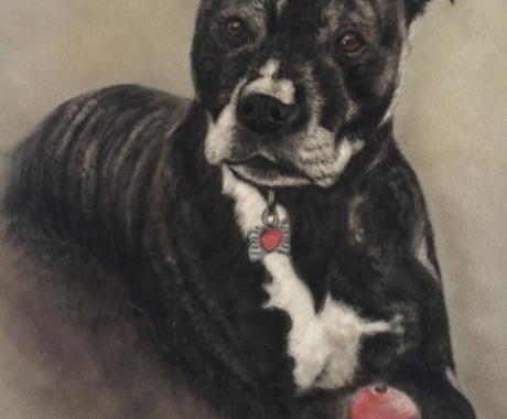 Commission of Staffie