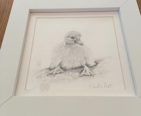 Duckling Sketches