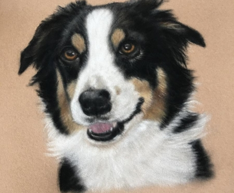 Tri-coloured Collie commission